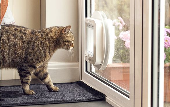 Cat Door Installation Te Awamutu Pet Door Installation Waipa